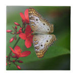 Mariposa blanca en las flores rojas azulejos