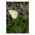 Mariposa blanca en los flores de la lavanda tarjeton