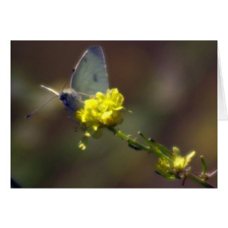 Mariposa blanca felicitaciones