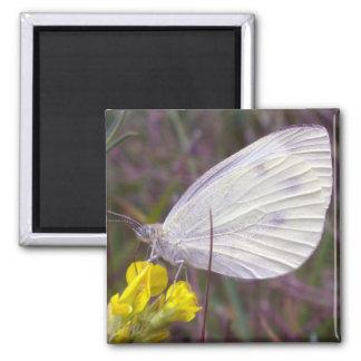 mariposa blanca imán cuadrado