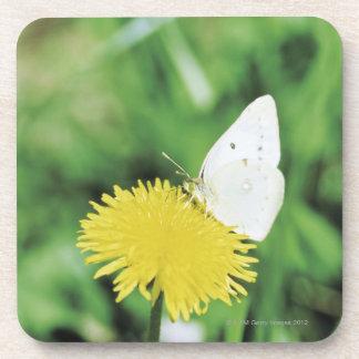 Mariposa blanca que alimenta en un diente de león posavasos de bebidas