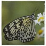 Mariposa blanco y negro de la ninfa servilleta de papel