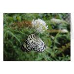 Mariposa blanco y negro en la flor tarjetas