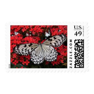 mariposa blanco y negro en las flores rojas, timbres postales