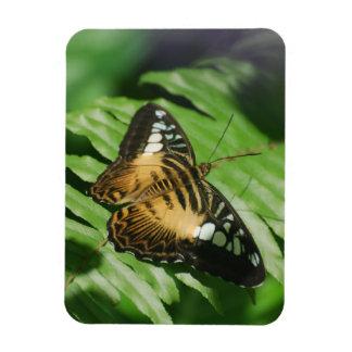 Mariposa bonita de las podadoras iman de vinilo