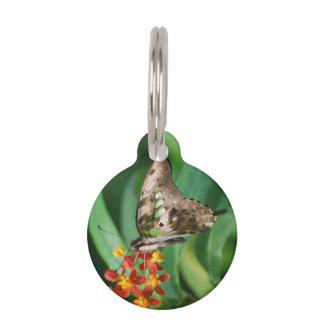 Mariposa bonita de Swallowtail Placas De Mascota