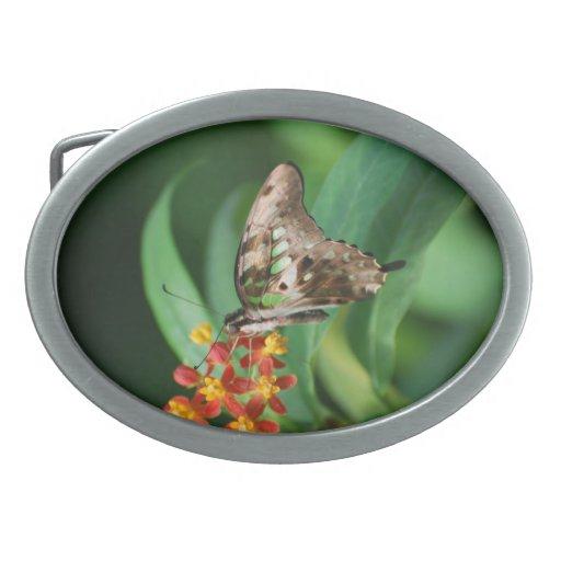Mariposa bonita de Swallowtail Hebillas Cinturon Ovales