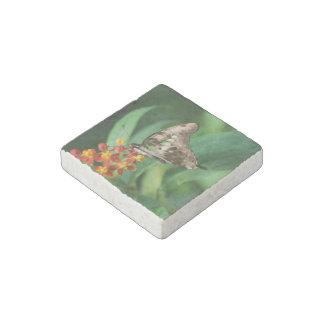 Mariposa bonita de Swallowtail Imán De Piedra
