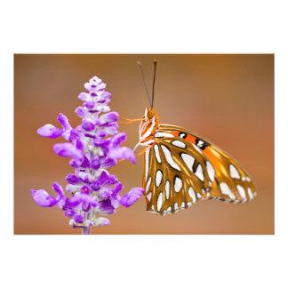 Mariposa bonita del Fritillary del golfo Fotografía