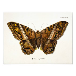Mariposa borrosa de la plantilla de la polilla de  cojinete
