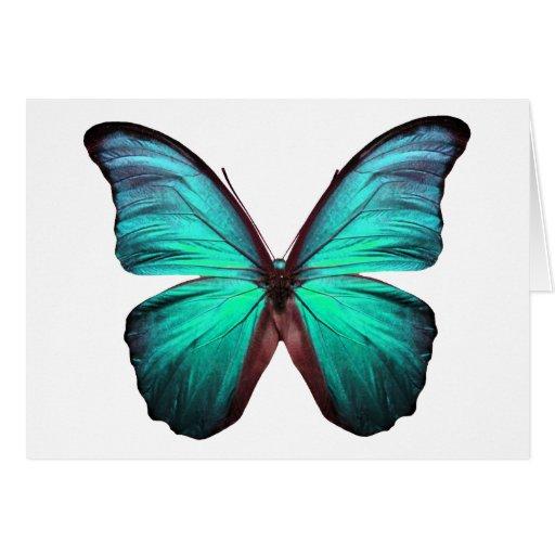 Mariposa brillante del trullo tarjeta