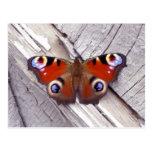 mariposa brillante postales