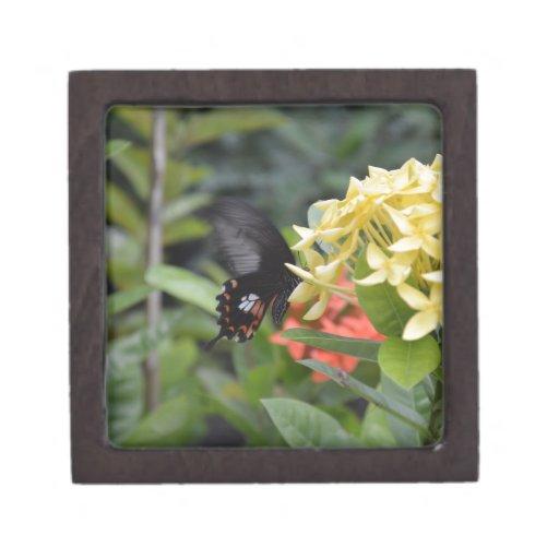 Mariposa Cajas De Joyas De Calidad