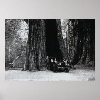 Mariposa California Auto Tree Print