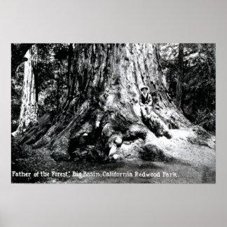 Mariposa California Redwood Park Poster