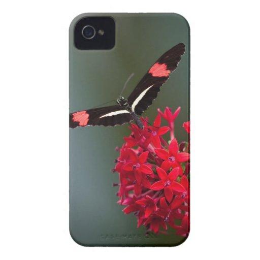 Mariposa Case-Mate iPhone 4 Coberturas