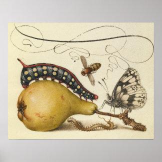 Mariposa Caterpillar de la abeja de los insectos d Posters