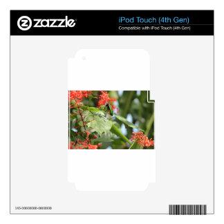 Mariposa colorida calcomanía para iPod touch 4G