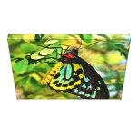 Mariposa colorida en lona impresión en lona estirada