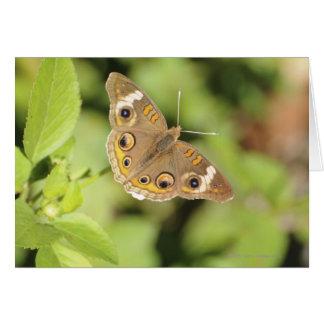 Mariposa común del castaño de Indias, Junonia coen Tarjeta
