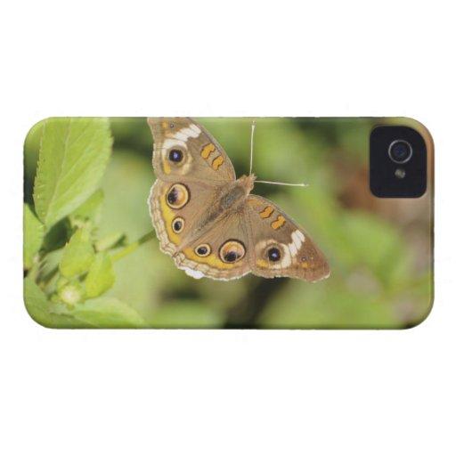 Mariposa común del castaño de Indias, Junonia Funda Para iPhone 4