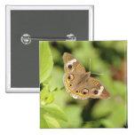 Mariposa común del castaño de Indias, Junonia Pin Cuadrado