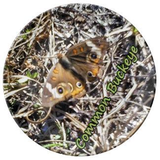 Mariposa común del castaño de Indias Plato De Porcelana