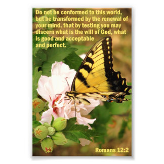 Mariposa con 12:2 de los romanos cojinete
