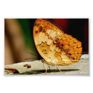 Mariposa con base del cepillo rústico fotografía