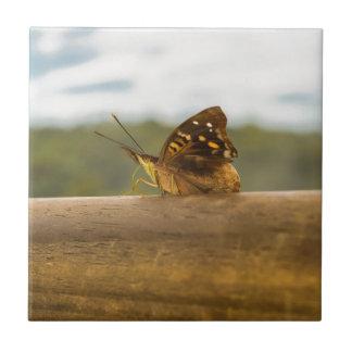 Mariposa contra fondo de la falta de definición en azulejo cuadrado pequeño