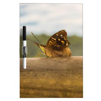 Mariposa contra fondo de la falta de definición en tableros blancos
