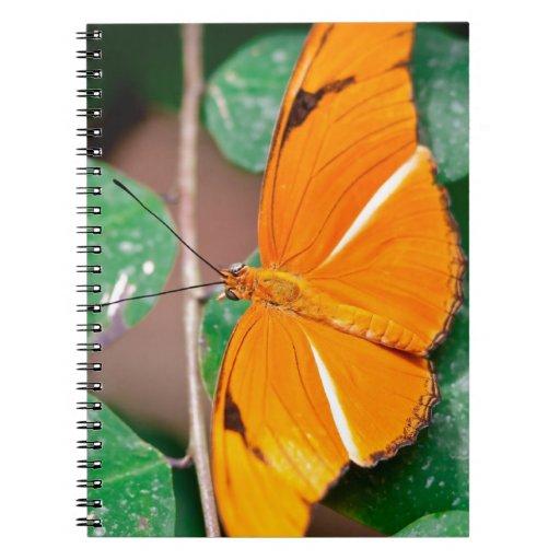 Mariposa Cuadernos
