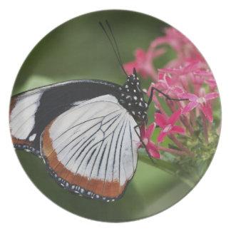 Mariposa de África Platos