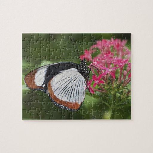 Mariposa de África Puzzle Con Fotos