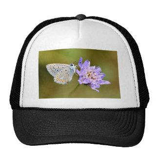 Mariposa de Argus en la flor Gorros