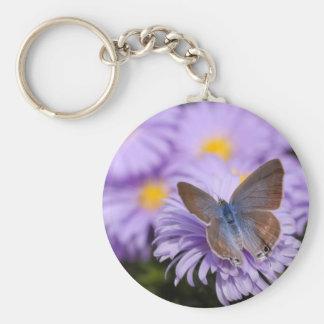Mariposa de Argus en la flor Llaveros