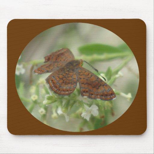 Mariposa de Arizona Metalmark Tapete De Raton