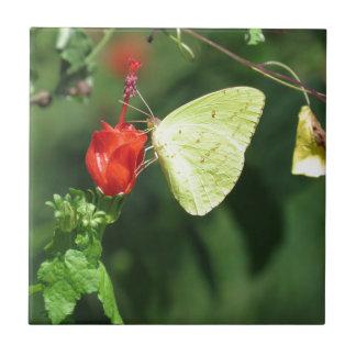 Mariposa de azufre en la flor roja azulejo cuadrado pequeño