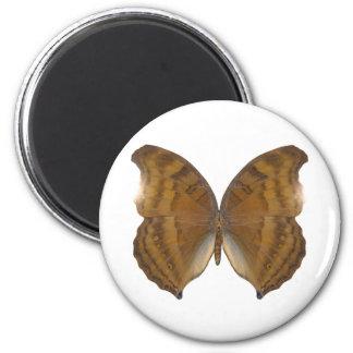 Mariposa de BeechWing Imán Redondo 5 Cm