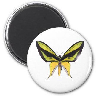 Mariposa de BirdWingX Imán Redondo 5 Cm