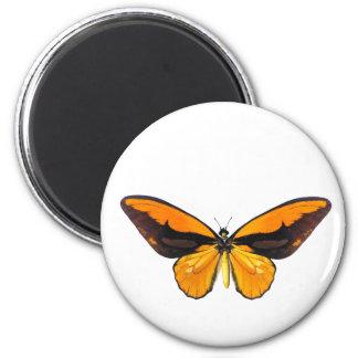 Mariposa de BirdWingY Imán Redondo 5 Cm