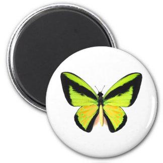 Mariposa de BirdWingZ Imán Redondo 5 Cm