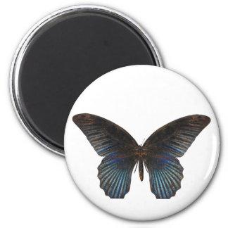 Mariposa de BlueSwallowTail Imán Redondo 5 Cm