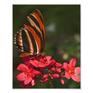 Mariposa de Brushfoot Fotografías