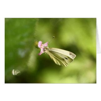 mariposa de col en wildflower rosado tarjeta pequeña