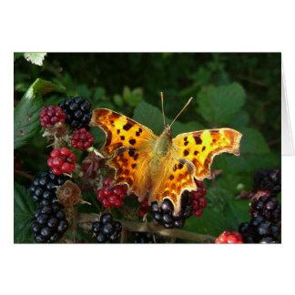 mariposa de coma en las zarzamoras tarjeta de felicitación