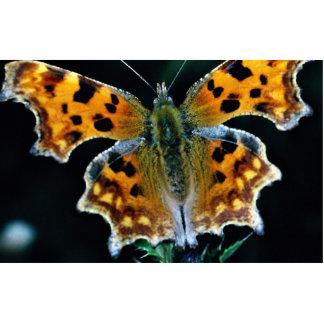 Mariposa de coma fotoescultura vertical