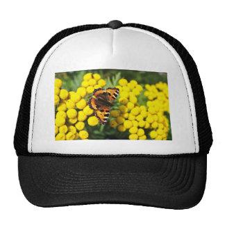 Mariposa de concha en las flores del tansy gorro