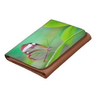 Mariposa de cristal del ala que se relaja en verde