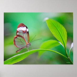 Mariposa de cristal del ala que se relaja en verde póster